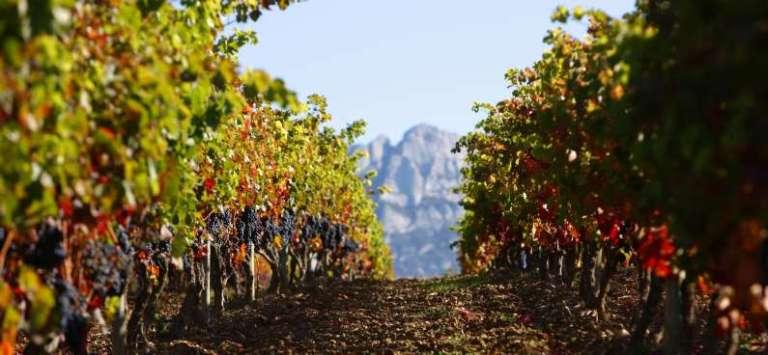 Vineyards of Rioja of Alava