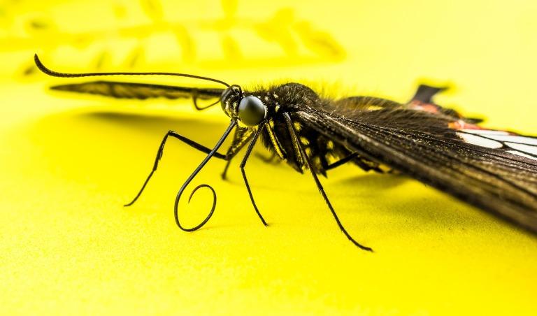 butterfly-346826_1920