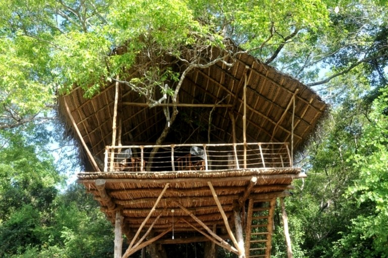 Exotic Tree Houses Tucked Away in the Rainforest in Sigiriya, Sri Lanka - Glamping Hub